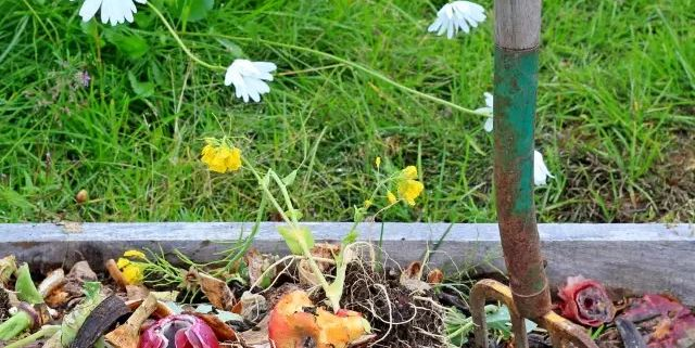 Qui dit potager dit compost jardin roger van den hende for Le jardin qui dit non