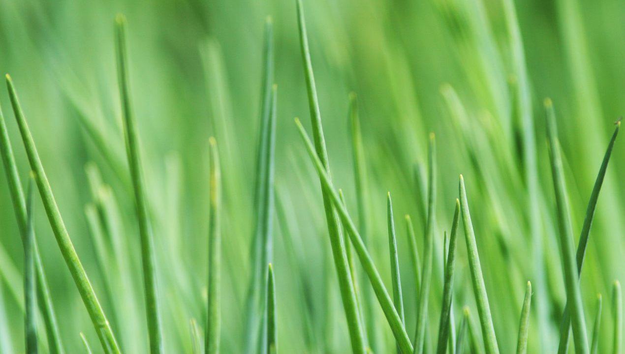 Les ateliers du jardin jardin roger van den hende for Atelier du jardin d acclimatation