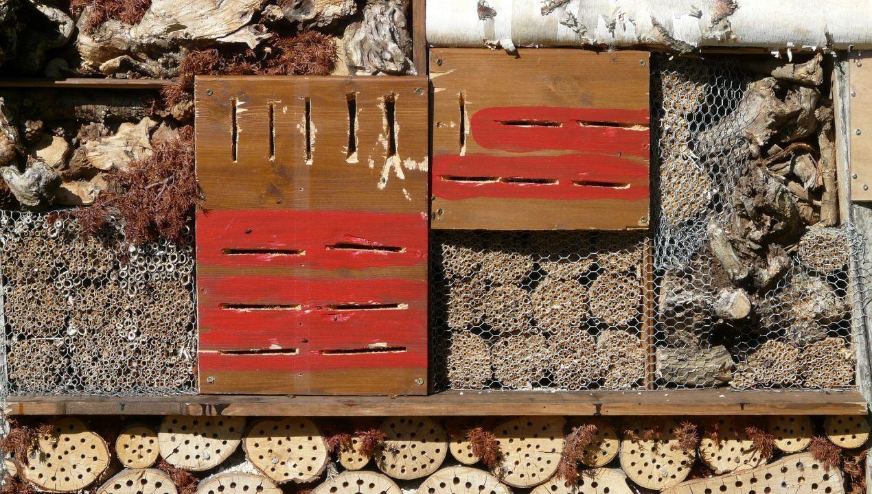 fabriquer une maison d 39 insectes pollinisateurs jardin roger van den hende. Black Bedroom Furniture Sets. Home Design Ideas
