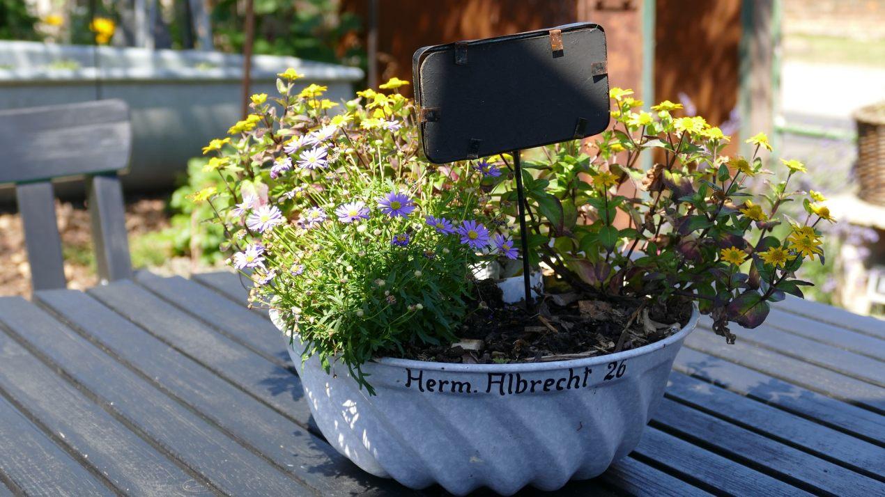 l gumes en pots groupe 1 jardin roger van den hende. Black Bedroom Furniture Sets. Home Design Ideas